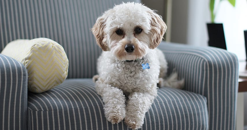 4 Carpet Cleaning Tips for Homes with a Dog